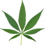 Cannabis_leaf_2